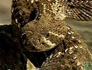 YouTube/Texas Parks & Wildlife/tpwd.state.tx.us